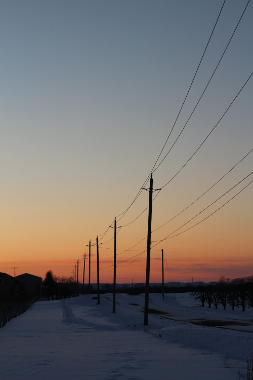 Electrical poles silhouetted against a pink, orange, and blue sky. There is blue snow on the ground and a barn on the horizon.
