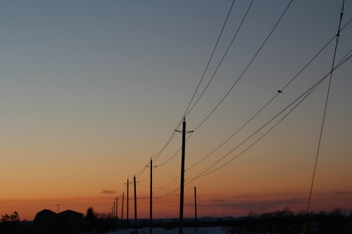 A dove sits on an electrical wire. Electrical poles silhouetted against a pink, orange, and blue sky. There is blue snow on the ground and a barn on the horizon.